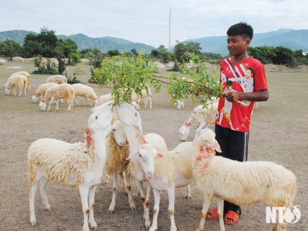 Sản phẩm đặc thù của tỉnh Ninh Thuận được nâng tầm thương hiệu