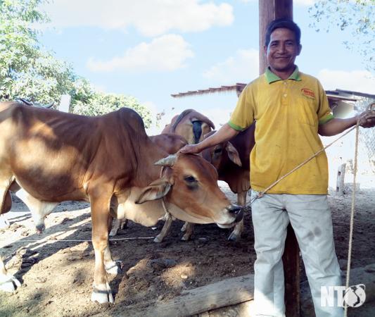 Chăn nuôi gia súc có sừng phát triển mạnh